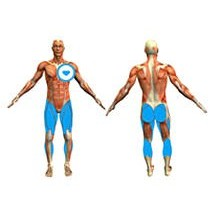 elliptique-coach-mp3-jambes-fessiers-p1-n1-f2