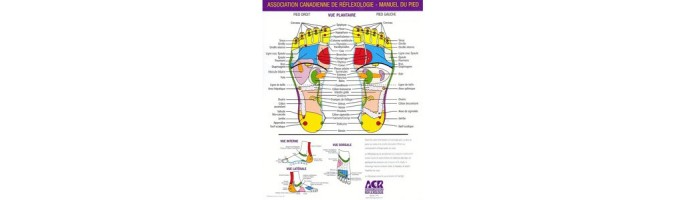 Acupuncture et Réflexologie